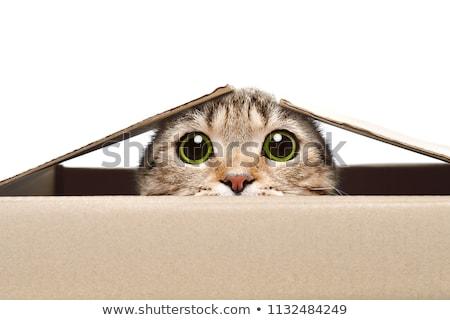 Cacher chat derrière bleu tente carré Photo stock © Koufax73