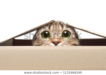 Verbergen kat achter Blauw tent vierkante Stockfoto © Koufax73