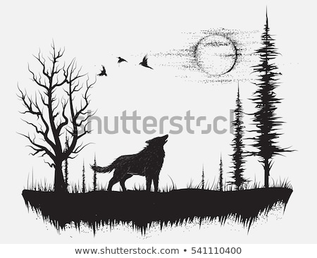 Wilk światło księżyca ilustracja charakter górskich noc Zdjęcia stock © adrenalina