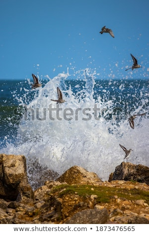 sea birds lift off stock photo © rghenry