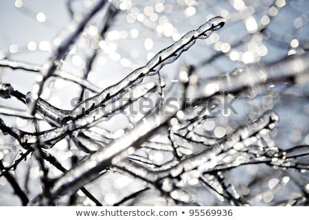 長い 凍結 支店 春 太陽 冬 ストックフォト © Juhku