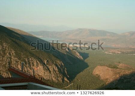 Olive trees in Delphi, Greece Stock photo © deyangeorgiev