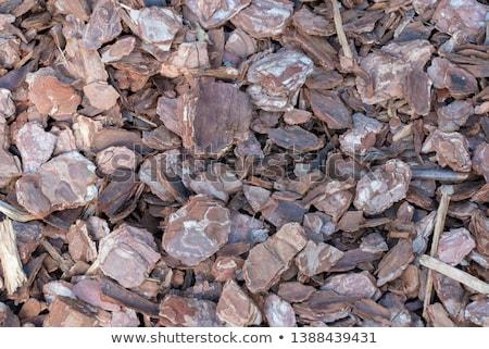 Natural bark surface Stock photo © meinzahn
