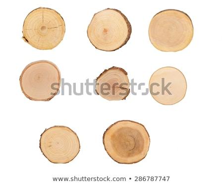 Ash tree trunk cross section Stock photo © stevanovicigor
