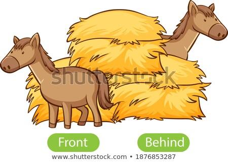 Mektup i örnek kedi arka plan sanat Stok fotoğraf © bluering