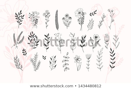 vektor · körvonal · egyszerű · virág · virágmintás · dizájn · elem - stock fotó © lissantee