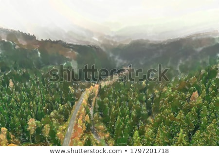Road through the forest, view from height - aerial photo Stock photo © vlad_star