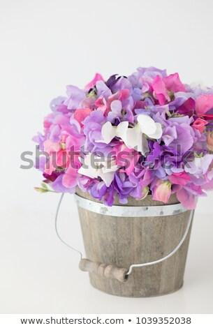 цветы полный розовый флора растущий вверх Сток-фото © Klinker