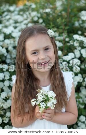 Bokor virágok kicsi fehér virágok áll tavasz Stock fotó © Klinker