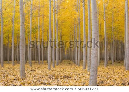 Oregon · madeira · floresta · rio · trevo · irlandês - foto stock © davidgn