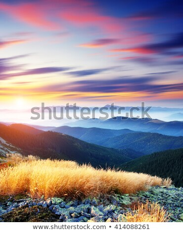 Magical yellow dry grass glowing by sunlight. Dramatic scene and Stock photo © Leonidtit