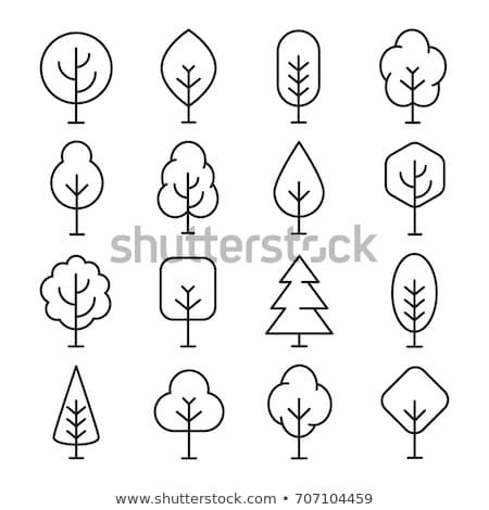 pine trees line icon stock photo © rastudio