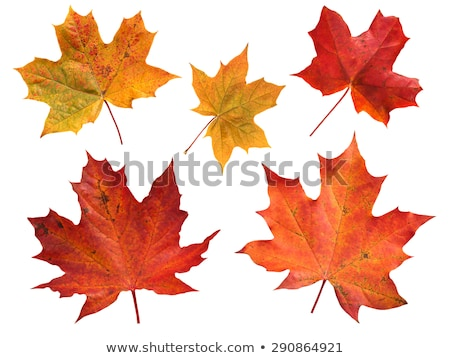 набор · желтый · листьев · дерево · древесины - Сток-фото © 5xinc
