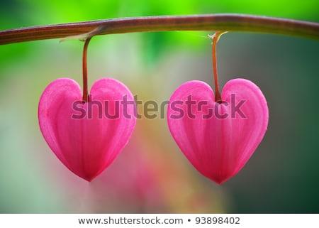 два · подвесной · сердцах · Jewel · розовый · любви - Сток-фото © sarts