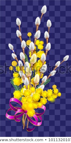 Yellow mimosa and fluffy branch of pussy willow bouquet Stock photo © orensila