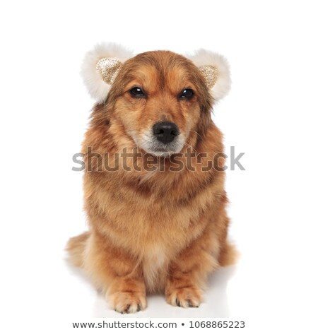 vicces · fülek · vegyes · fajta · barna · kutya · fekete - stock fotó © feedough