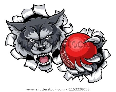 Сток-фото: Wolf Cricket Mascot Breaking Background