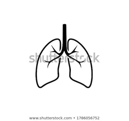solunum · vücut · tıp · çizim · erkek · göğüs - stok fotoğraf © bluering