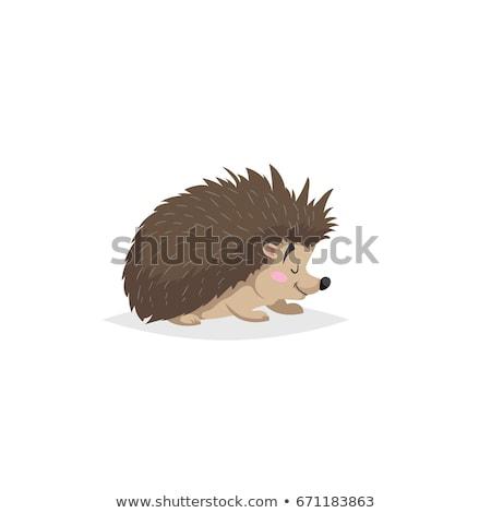Cute Hedgehog Cartoon Flat Vector Sticker or Icon Stock photo © robuart