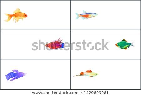 Exotic Marine Animals with Shine Fins and Skins Stock photo © robuart