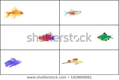 tengeri · állatok · gyűjtemény · természet · tenger · óceán - stock fotó © robuart