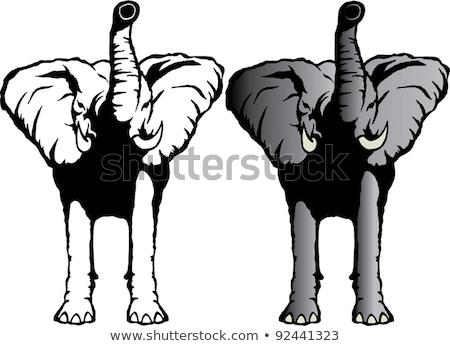 bull elephant head charging circle stock photo © patrimonio