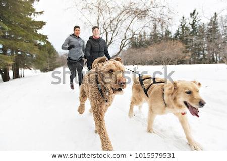 vrouw · groep · honden · winterseizoen · jonge - stockfoto © Lopolo