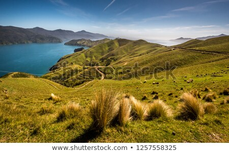Marlborough Sounds Stock photo © naumoid