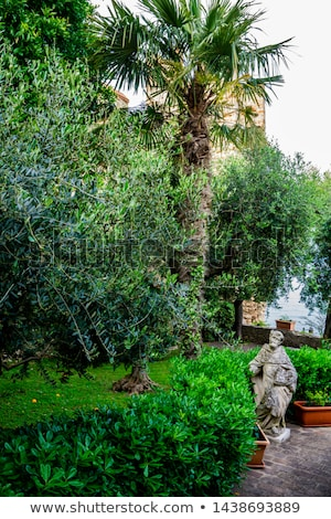 beautiful garden in sirmione small town on the shores of lake stock photo © boggy