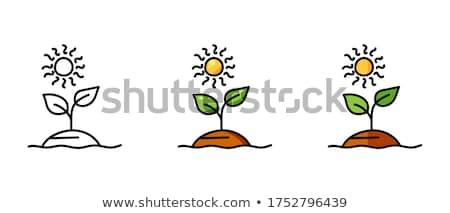 Kert gyökerek vektor ikon rajz stílus Stock fotó © robuart