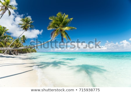 Foto d'archivio: Tropical Beach With Palm Trees In French Polynesia