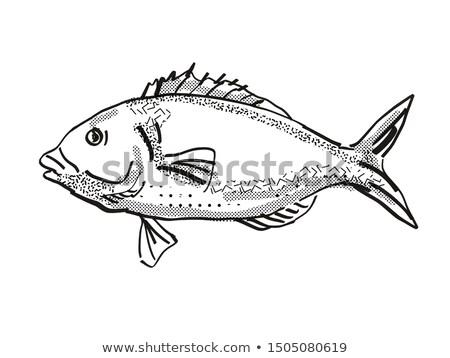 Tarakihi New Zealand Fish Cartoon Retro Drawing Stock photo © patrimonio