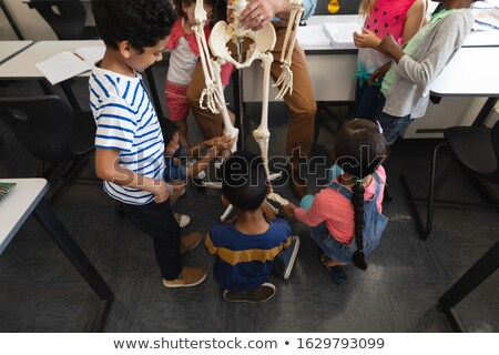 High angle view of schoolkids learning anatomy of human skeleton in classroom of elementary school Stock photo © wavebreak_media