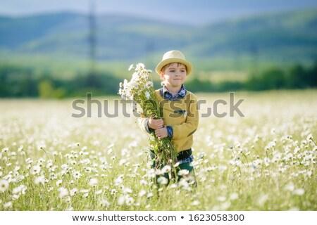 子 花束 ヒナギク 農業の フィールド 花 ストックフォト © ElenaBatkova