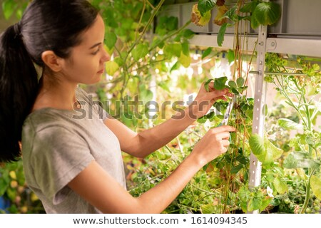 Young woman in workwear cutting dry yellow leaves of strawberry bushes Stock photo © pressmaster