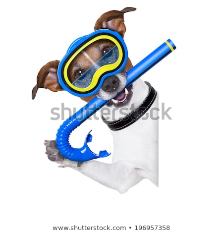 Szczeniak snorkeling narzędzi biały funny Zdjęcia stock © tobkatrina
