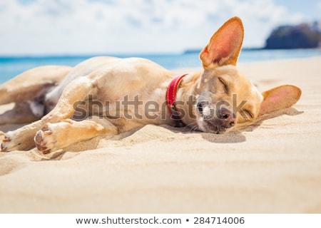 snem · psów · trzy · do · góry · nogami · odizolowany - zdjęcia stock © ldambies