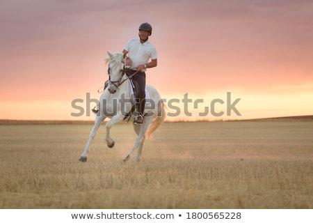 Caballo negro caballos blanco animales Foto stock © luiscar