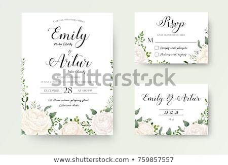 Beyaz gül vektör dizayn güller Stok fotoğraf © Galyna
