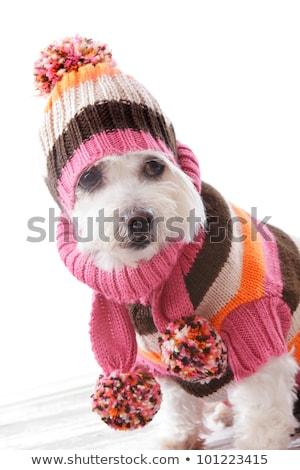 帽子 · 縞模様の · スカーフ · カラー · 女性 · パターン - ストックフォト © lovleah