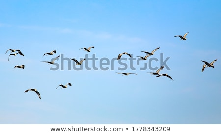 Uçan gökyüzü erkek mavi gökyüzü yaz mavi Stok fotoğraf © OleksandrO