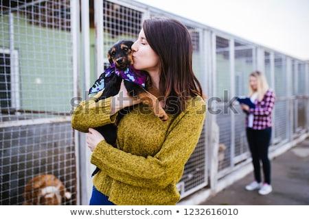 救助 · 犬 · ビーチ · 実例 · 海 · ヘルプ - ストックフォト © oleksandro