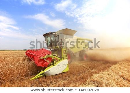 Zbiorów saskatchewan spadek gospodarstwa żółty świeże Zdjęcia stock © pictureguy