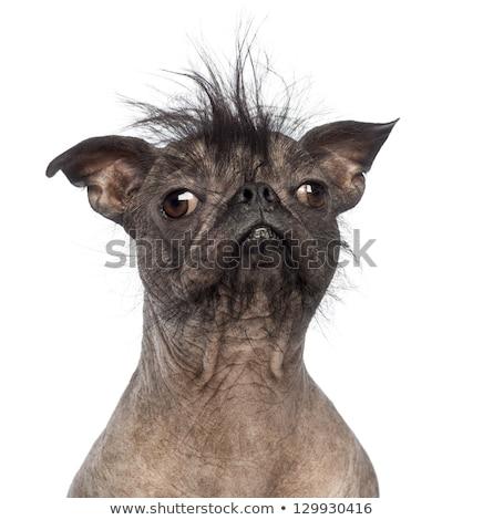 醜い 犬 黒 アスファルト 道路 動物 ストックフォト © stevanovicigor