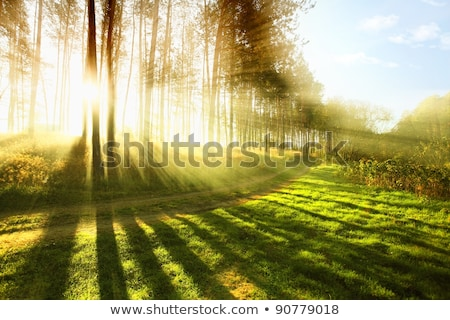Path in early autumn forest at dawn Stock photo © nature78