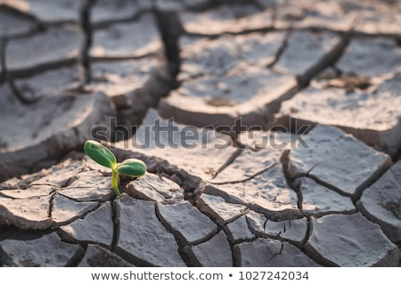 Plant Struggling in Desert Stock photo © jkraft5