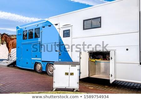 cavalos · paisagem · azul · céu · Primavera · grama - foto stock © frank11