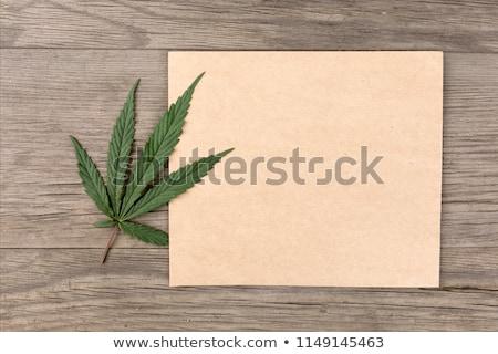Hennep blad grunge bloem textuur gras Stockfoto © pashabo