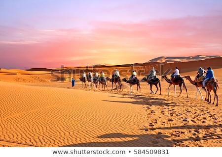 Szahara tevék emberek desszert Tunézia tájkép Stock fotó © jonnysek