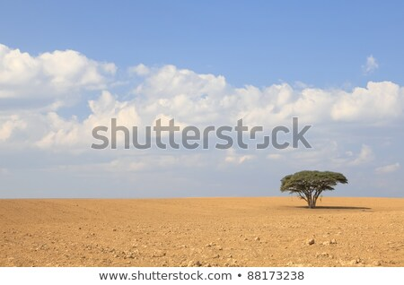Lonely tree on the empty field Stock photo © CaptureLight